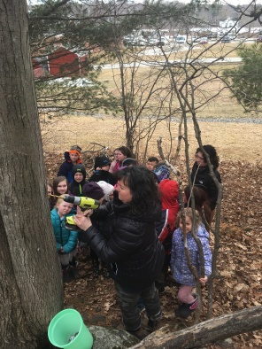 Tree tapping at Atwood shortly before school closing.